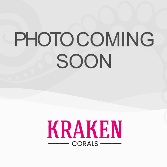 Mushrooms 1 Coral WYSIWYG