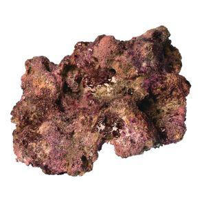 TMC EcoReef Rock # Mini 32 Plate - 19cm x 13 x 9cm