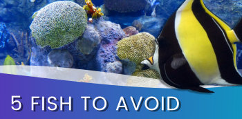 Top 5 Marine Fish you should possibly avoid.
