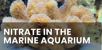 Nitrate in the Marine Aquarium