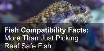 Fish Compatibility Facts: More Than Just Picking Reef Safe Fish