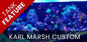 Featured Tank: Karl Marsh
