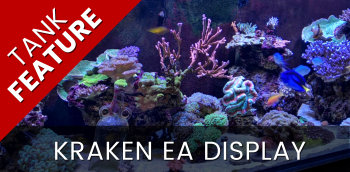 Featured Tank: Kraken Entrance Display Feb 20