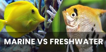 Saltwater Vs. Freshwater Aquariums: The Best Fish, Tank Setup, & Care For Your Home Aquarium