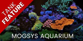 Featured Tank: Mogsys Aquarium