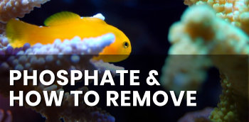Phosphate, and how to remove it from the marine aquarium.