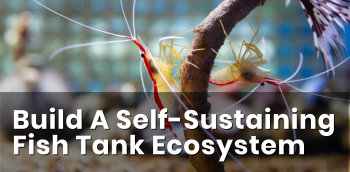 Before You Pick Fish For A Saltwater Aquarium, Build A Self-Sustaining Fish Tank Ecosystem